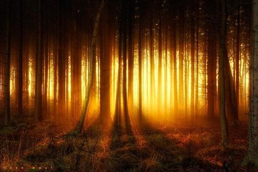 nature 5 oerwout