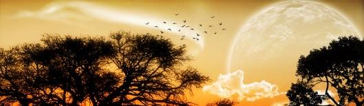 unique-moon-birds-fantasy-abstract-website-header